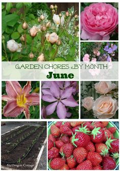 A list of June Garden Chores for vegetables & flowers - An Oregon Cottage