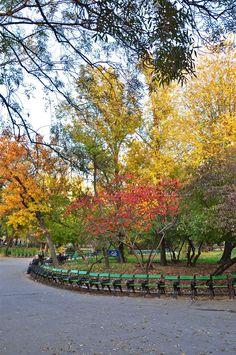 Plimbare de toamnă in Parcul Cismigiu | Autumn walk in Cismigiu Gardens ©Epoque Hotel Bucharest Park Benches, Bucharest, Garden Landscaping, 19th Century, Vineyard, Places To Visit, Gardens, Landscape, Country