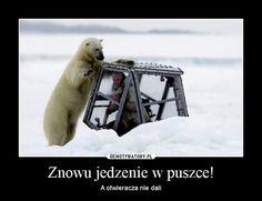 Znalezione obrazy dla zapytania gawra niedźwiedzia Polar Bear, Lol, Humor, Memes, Funny, Challenge, King, Animals, Board