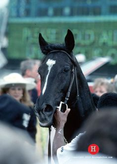 *Sunday Silence: The Star No One Wanted - America's Best Racing. The Jockey Club Barrel Racing Saddles, Barrel Racing Horses, Horse Saddles, Horse Halters, Clydesdale Horses, Thoroughbred Horse, Breyer Horses, Saratoga Horse Racing, Horse Show Clothes