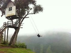 Beautifully perfect swing and tree house