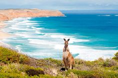 Scenes of Australia