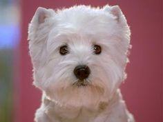 cesar dog.....so cute!
