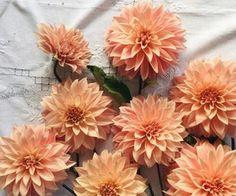 flowers, orange, and peach image Orange Aesthetic, Aesthetic Colors, Flower Aesthetic, Aesthetic Pastel, Beige Aesthetic, Orange Pastel, Solas Dragon Age, Jandy Nelson, Plants Are Friends
