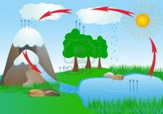 Find activities to make teaching water cycle exciting and engaging for your students. This post features book suggestions, science, writing, plus a freebie! Science Projects For Kids, Science For Kids, Earth Science, Middle School Science, School Projects, Water Cycle Activities, Weather Activities, Science Activities, Science Experiments
