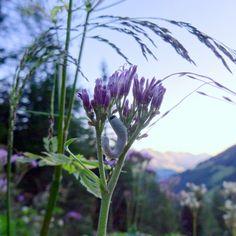 preisgekrönte websites Mountains, Website, Nature, Plants, Travel, Mystical Pictures, Viajes, Traveling, Flora