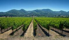 a closer look at napa valley vineyards To learn more about the #NapaValley Wine Trolley and our tours click here: https://www.napavalleywinetrolley.com/