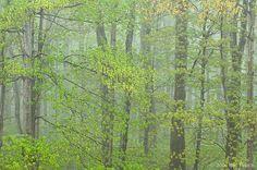 Deciduous Hardwood Forest During Rain, Spring, Pictured Rocks National ... Rod_Planck_Deciduous_Forest_During_Rain_Spring_PRNL_Michigan.jpg (600×399)