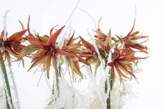 A lovely arrangement by Pim van den Akker with Amaryllis and ostrich feathers. Watch the How to make video on the Flower Factor website.