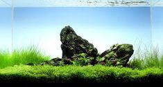 Layout 26 - Mark Evans - Tropica Aquarium Plants