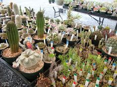 danger garden: Oregon Cactus & Succulent Society Show and Sale