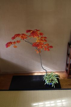 ハウチワカエデ http://philosophy-of-bonsai.cocolog-nifty.com/photos/uncategorized/2013/10/30/002323.jpg