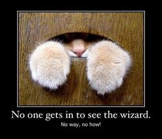 No one gets in to see the wizard - http://jokideo.com/no-one-gets-in-to-see-the-wizard/