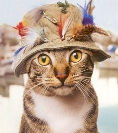 Flyfishing Cat