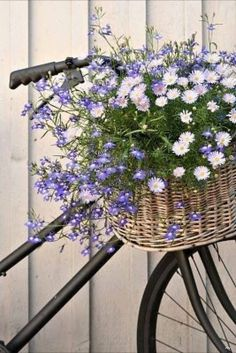 spring bike  via Marjorie Kuipers