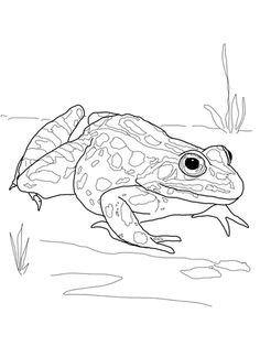 African Leopard Coloring Page