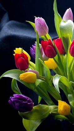 Flowers For You, Tulips Flowers, Blooming Flowers, Flower Background Wallpaper, Flower Backgrounds, Beautiful Moon, Beautiful Gardens, India Painting, Tulip Bouquet