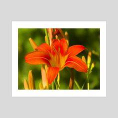 #INPRNT #fine art #print #poster #art Meadow Garden, Print Poster, Lily, Fine Art, Art Prints, Printed, Gallery, Paper, Floral