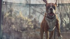 Every year, the British retailer John Lewis goes all out on a cinematic holiday ad. The past few years have been tear-jerkers, but this year, it went for the funny bone instead. Meet Buster the Boxer.