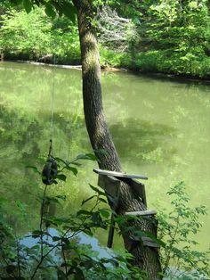 Swing from a tire swing into a river