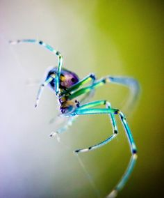 Macro Spider frommyfrontdoor.tumblr.com