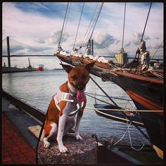 Check out this cutie hanging out on the River in Savannah