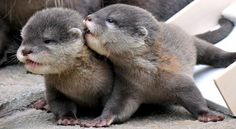"""Darling, let me whisper in your ear. """"I love you""""."""