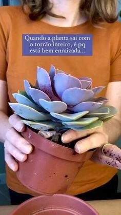 Cactus Y Suculentas, Green Life, Potted Plants, Greenery, Succulents, Home And Garden, Flowers, Diy, Gardening Tips