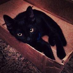This is probably one of my most FFFFAAAAVVVVOOOORRRRIIIITTTTEEEE Pictures I EVER took of him  #black #cat # kitten #kitty #babyboy #blackcat #blackkitty #blackkitten #yelloweyes