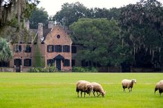 Middleton Place Historic Plantation and Gardens – Charleston, South Carolina (article)