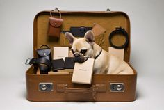 Dogs can travel too!