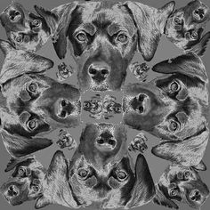 "Saatchi Online Artist TOULA MAVRIDOU-MESSER; Photography, ""NEW Photographic Art Print For Sale: Pop Art Abstract Rango Dog In Black And White"" #art"