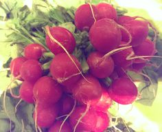 Radishes - growing in plant in your graden http://www.growplants.org/growing/radish
