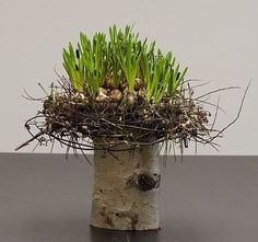 Remove the stump but keep the stick wreath around the bulbs. Great texture for table centerpiece.