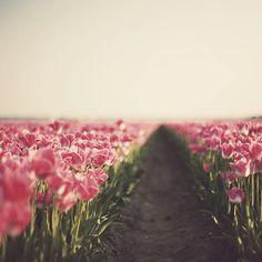 prettylittleflower:  365-079b (by Morphicx)