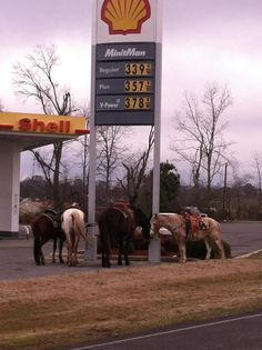 Ride a horse save on gas!