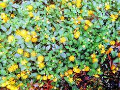 Viernes amarillito por la cuadra! (yellow friday by my block). Plants, Friday, Colors, Plant, Planets