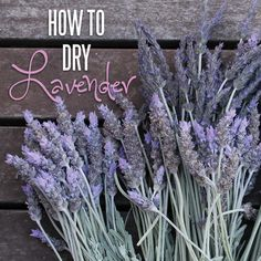 How to dry lavender so awesome to know this. Can use this for calming baths at the end of a long day