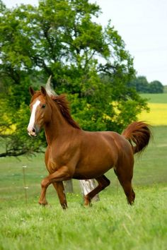 Beautiful :) Hopefully someday I can own a horse.. or horses :)