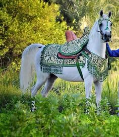 Beautiful Arabic horse Keep Calm and Gallop On Beautiful Arabian Horses, Most Beautiful Horses, Pretty Horses, Horse Love, Rare Horses, Horses And Dogs, Animals And Pets, Arabic Horse, Horse Armor