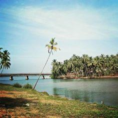 #Kapil #Varkala #Kerala #India #backwater #Travel #tourism #TOV #dayoutkerala #bridge #coconuttrees  https://www.facebook.com/VarkalaCity/photos/a.256195924391161.70980.231278596882894/1005023986175014/?type=1