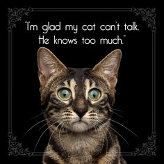 Do you tell your #cat everything? #catquotes Cat Quotes, Pet Health, Told You So, Pets, Nature, Animals And Pets, Quotes About Cats, The Great Outdoors, Mother Nature