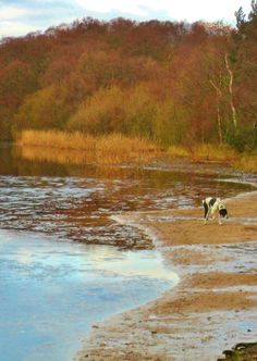 Dog investigating the ice, Bracebridge Pool, Sutton park, Sutton Coldfield, England All Original Photography by http://vwcampervan-aldridge....