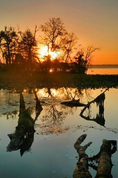 ✮ Dyke Marsh At Sunrise - Alexandria, Virginia