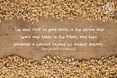 Matthew The Message, the parable of the sower Bible Verses, Scriptures, Holy Spirit, Animal Print Rug, Harvest, Seeds, It Cast, Messages, Sunday School