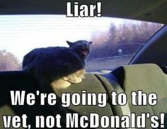 """LIAR!  We're going to the vet, NOT McDonald's !"" #McDonalds #Funny #Pets"