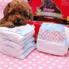DONO Pet Dog Physiological Pants Diapers Dog Diapers Cat Diapers