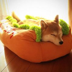 shiba in a hot dog bed Pretty Animals, Cute Funny Animals, Shiba Inu, Animals And Pets, Baby Animals, Pet Dogs, Dog Cat, Doggies, Japanese Dogs