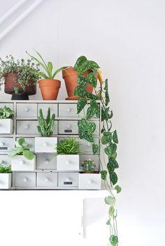 Indoor Gardens For Your Home Indoor Garden, Indoor Plants, Home And Garden, Mini Plants, Small Plants, Best Office Plants, Decoration Plante, Plants Are Friends, Interior Plants
