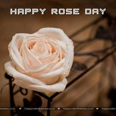 Rose Day - happy valentines day my love - http://www.happyvalentinesday.co.in/rose-day-happy-valentines-day-my-love/  #FreeEcardsFunny, #FreeEcardsOnline, #FunCards, #HappyValentinesDayECards, #HappyValentinesDayEmail, #HappyValentinesDayHoney, #HappyValentinesDayMommy
